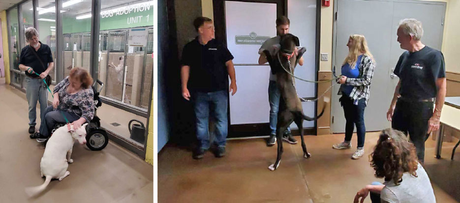 "Above, left: ""Getting to spend a little one-on-one time with Sugar (white American Bull Terrier) was one of the highlights of my afternoon,"" said Larry Hood, Slippery Rock editor.  Above:, right: This lucky Great Dane puppy was adopted that afternoon."