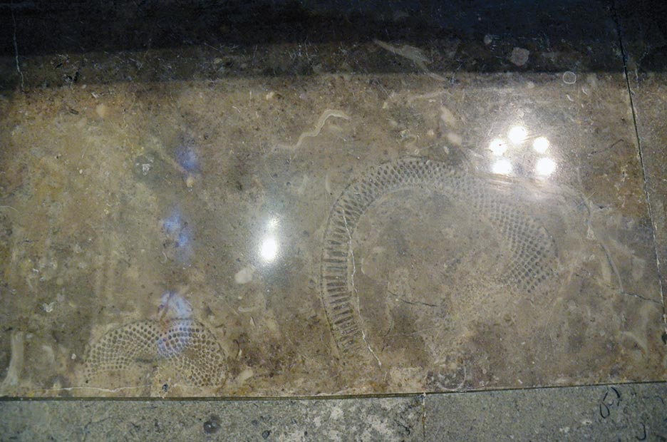 A detail of fossils embedded in the marble flooring shines through again.