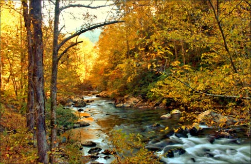 Autumn foliage by the Little River in East Tennessee, flowing  between Sugarlands and Cades Cove, Great Smokey Mountains.