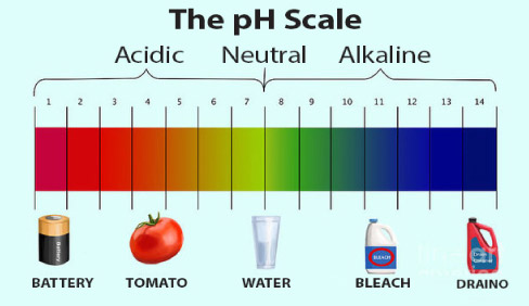 Water (pH neutral) sits right in the center of the scale. The lower the pH number, the stronger the acid (acidic) value is. Anything above a pH of 7 is considered an alkaline or base solution.